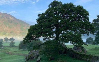 Living Oak's Philosophy