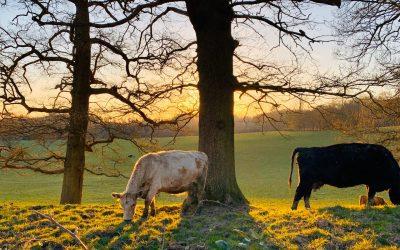 A Living Oak weekend in nature